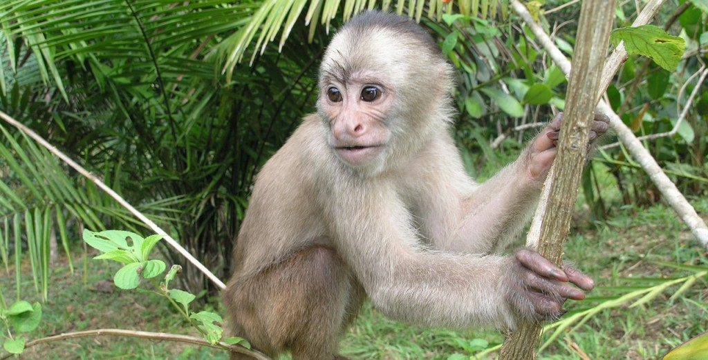 monkey-708475_1280
