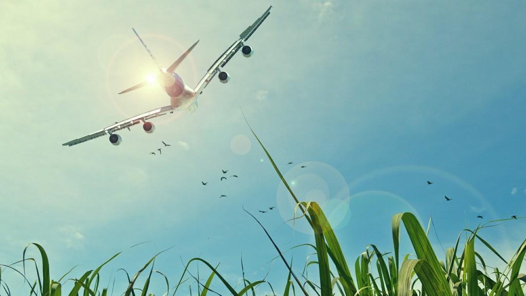 טיסות זולות